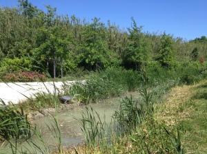 parc etienne daillan heron cendré